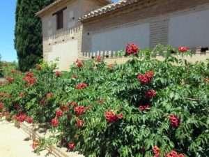 alhambra exproring blog spain