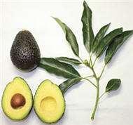 skin essential oil cosmetics avocado