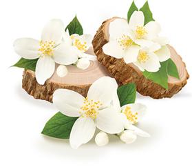 skin olive care myrrh oil