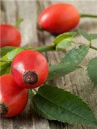 aging oil cosmetics skin essential rosehip